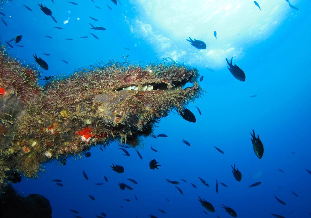 vida marina islas canarias